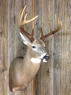 Mason S Taxidermy